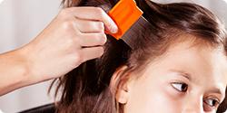 Shampooing et anti-poux